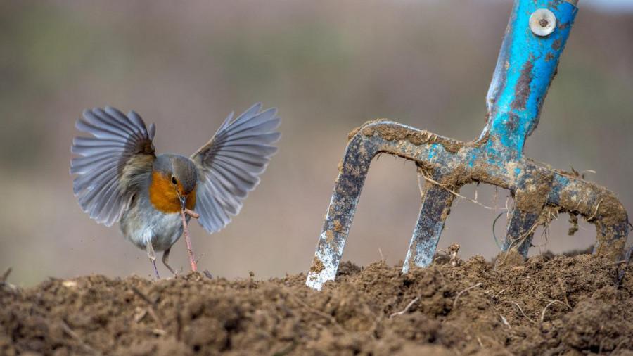 Ερασιτέχνες πουλί φωτογραφίες