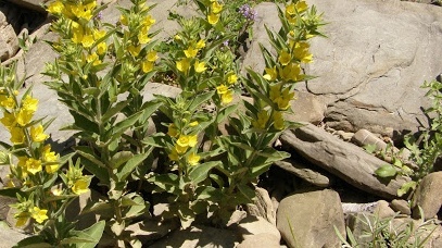 Ένα διακρατικό πρόγραμμα για τα αρωματικά φυτά