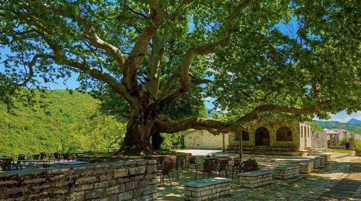 Τα δέντρα ως στοιχεία πολιτισμού - Typos-i.gr